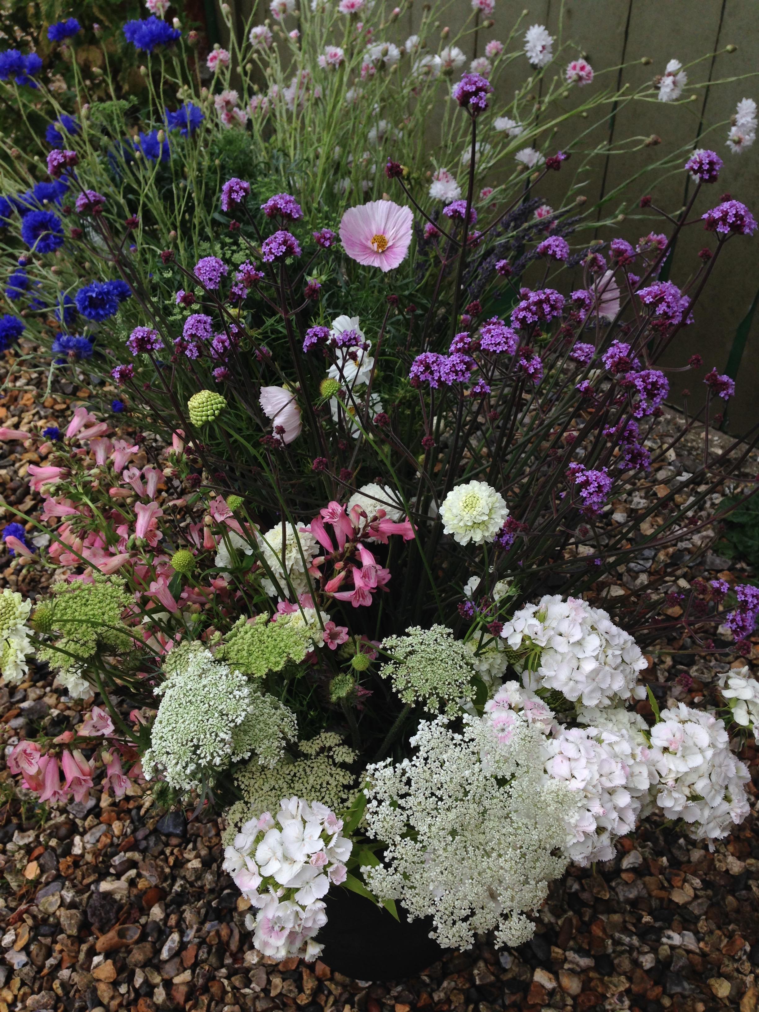 Summer-flowers-for-market